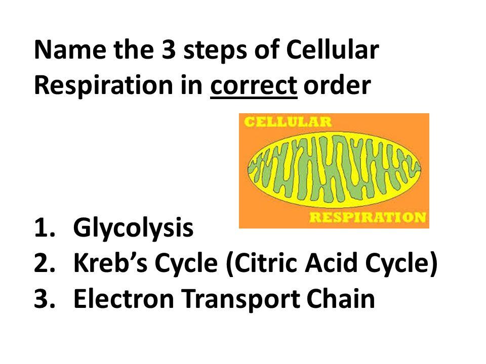 Energy: Cellular Respiration - - 74.7KB
