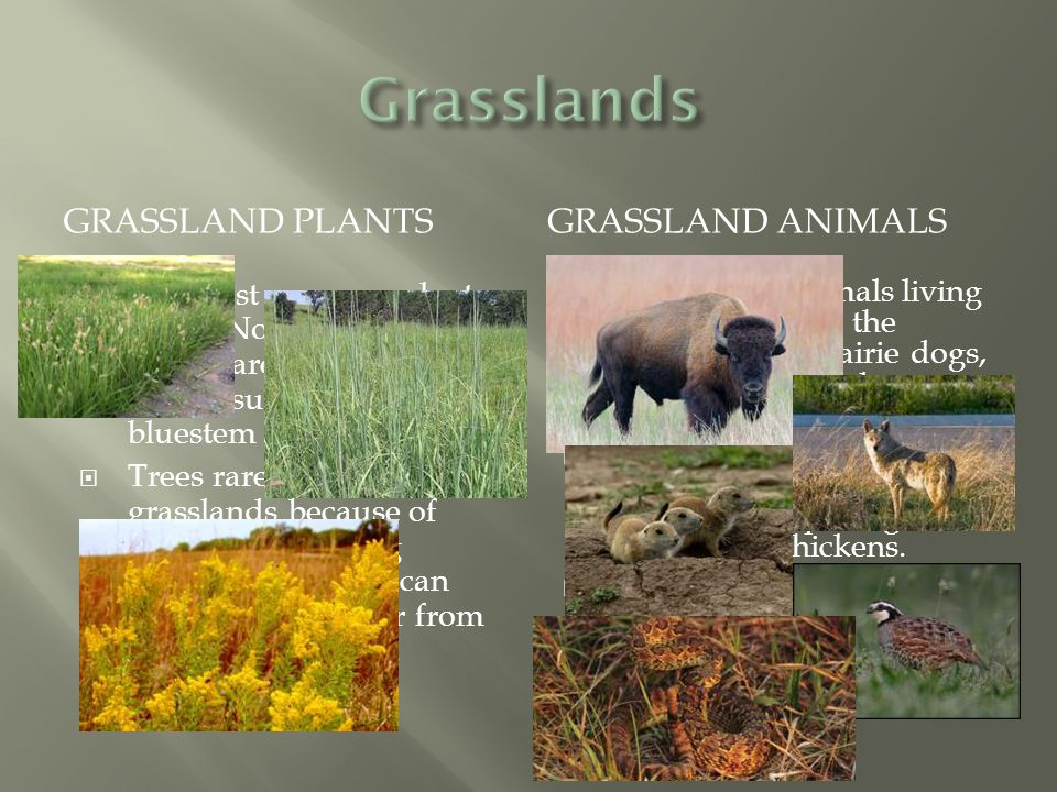 biomes ppt video online download