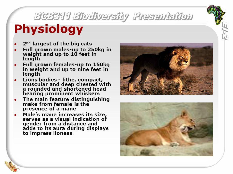 Ausgezeichnet Lion Anatomy And Physiology Bilder - Anatomie und ...