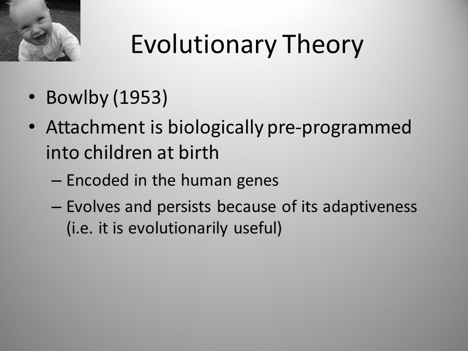 evolutionary theory of attachments Evolution is a key part of this theory, he believes certain genes are passed on to enable us the survive and genes that are not needed eventually die out adaptive is a key point, we make an attachment to provide us with a safe haven to enable us to explore the world.