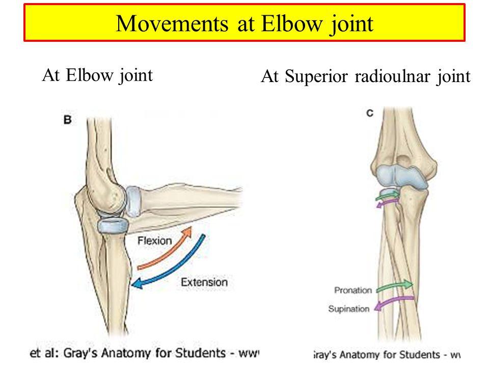 Perfecto Anatomy Of Elbow Joint Componente - Anatomía de Las ...