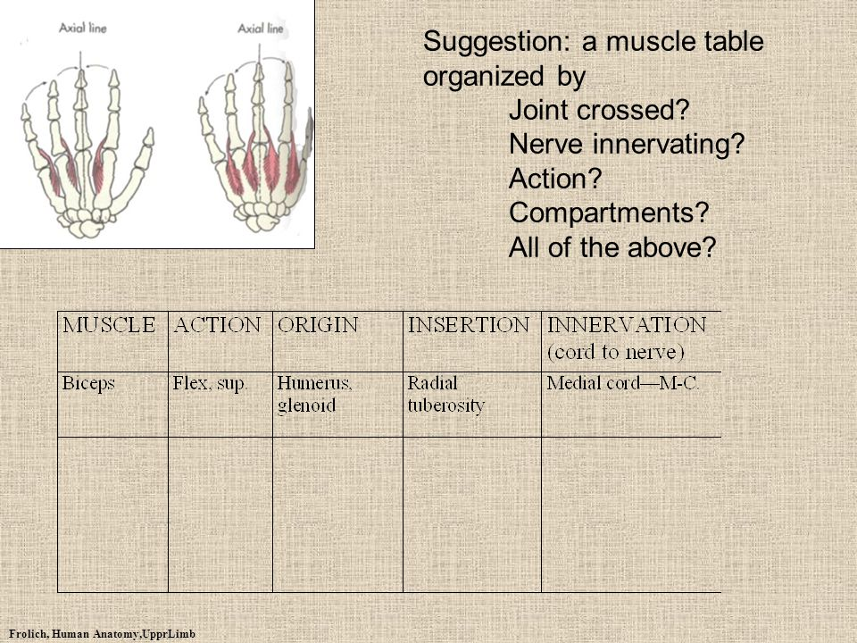 Suggestion: a muscle table organized by. Joint crossed
