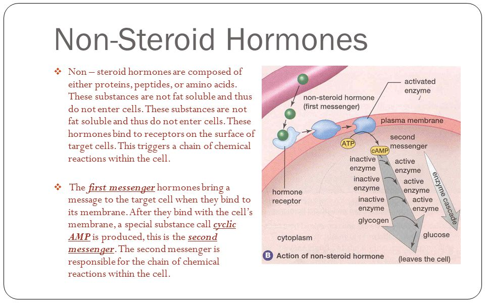 steroid hormones and peptide hormones differences