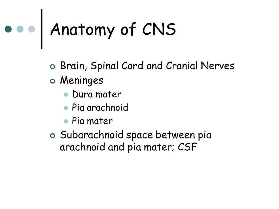 Anatomy of CNS Brain, Spinal Cord and Cranial Nerves Meninges