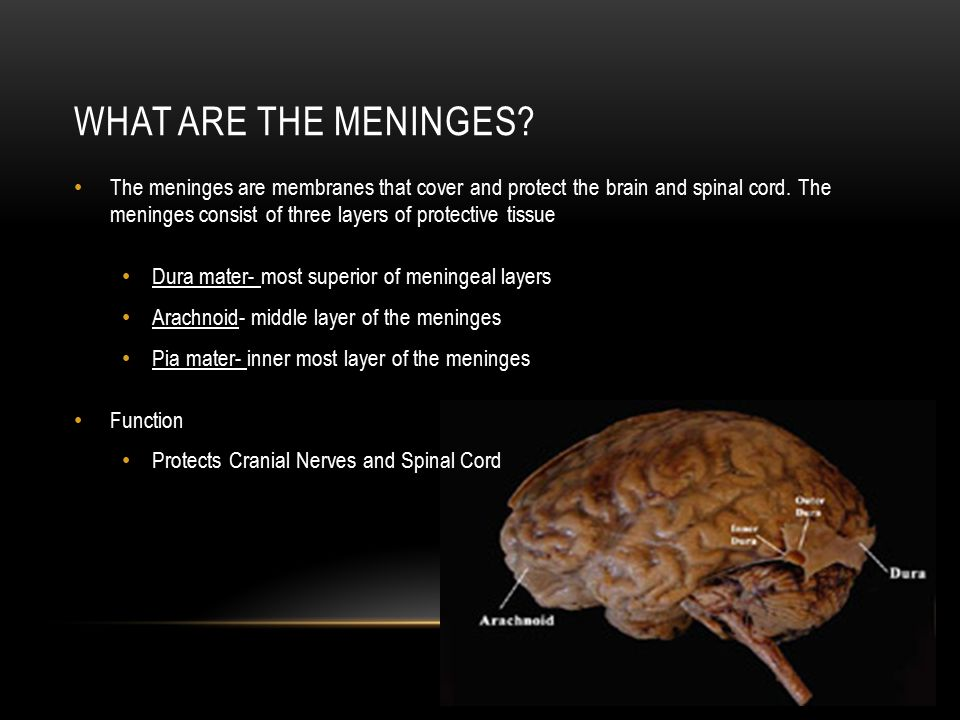 What are the meninges