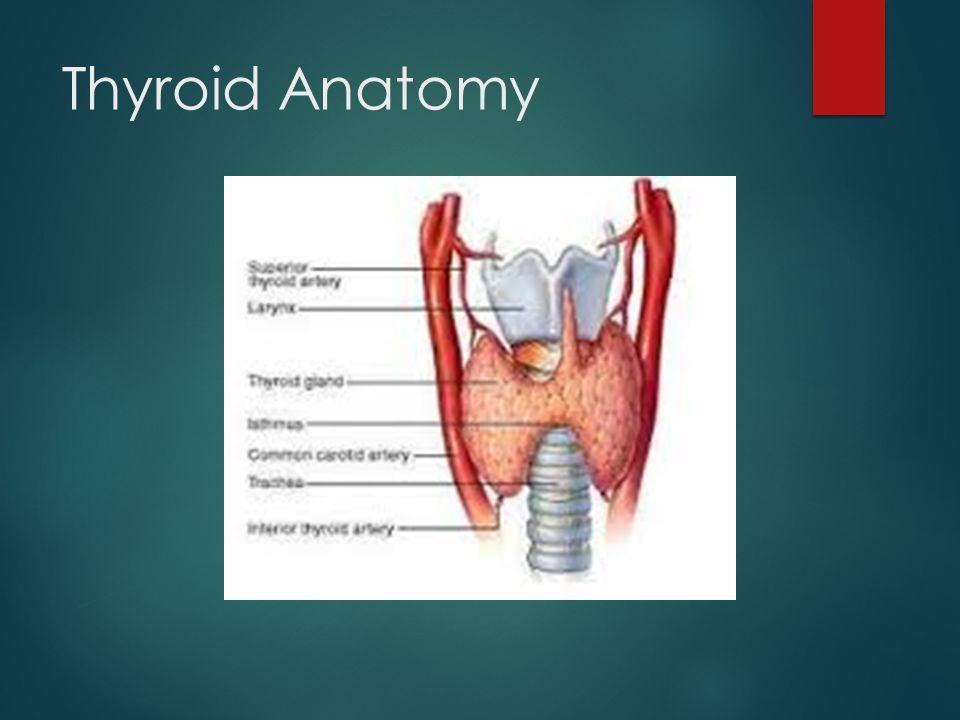 Neck anatomy ppt