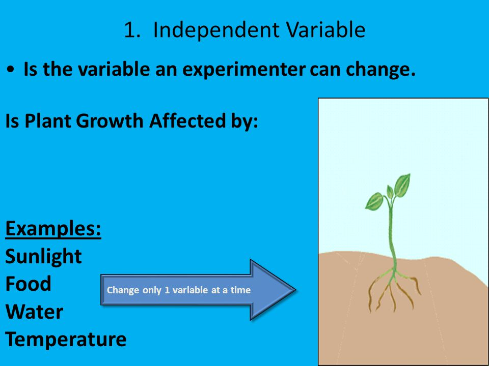 Experimental Variables - ppt video online download