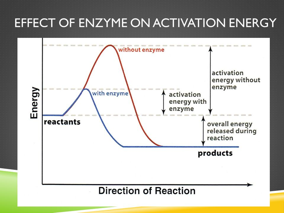 Effect of enzyme on activation energy