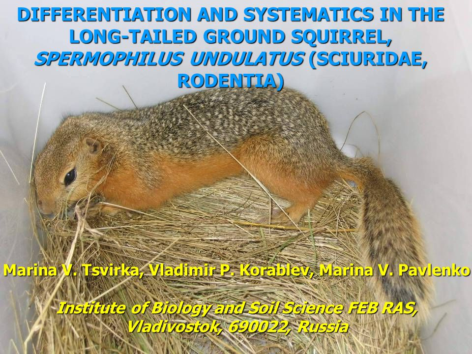 DIFFERENTIATION AND SYSTEMATICS IN THE LONG-TAILED GROUND SQUIRREL, SPERMOPHILUS UNDULATUS (SCIURIDAE, RODENTIA)