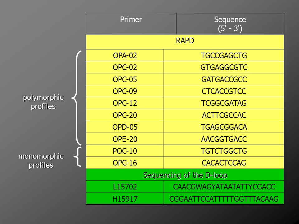 Sequencing of the D-loop L15702 CAACGWAGYATAATATTYCGACC H15917