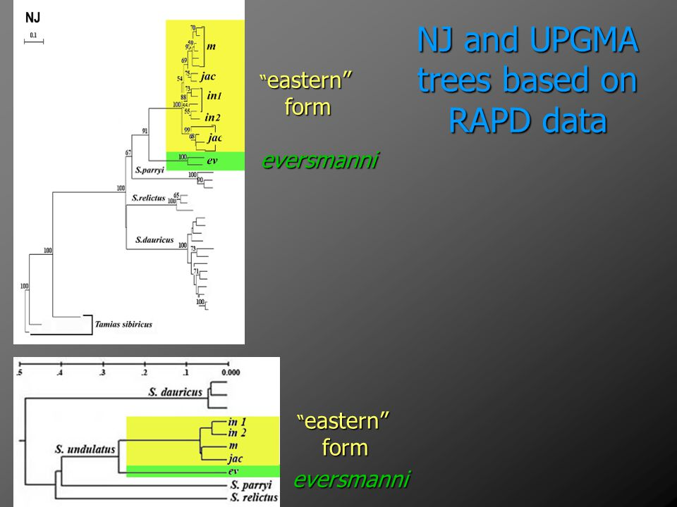 NJ and UPGMA trees based on RAPD data