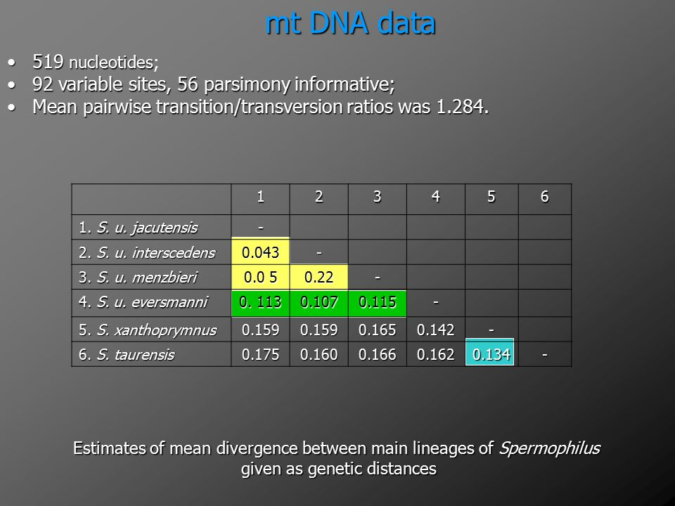 mt DNA data 519 nucleotides;