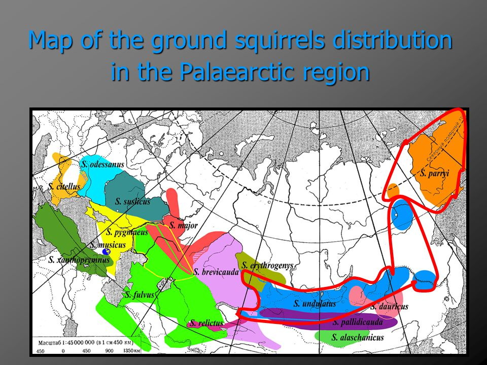 Map of the ground squirrels distribution in the Palaearctic region