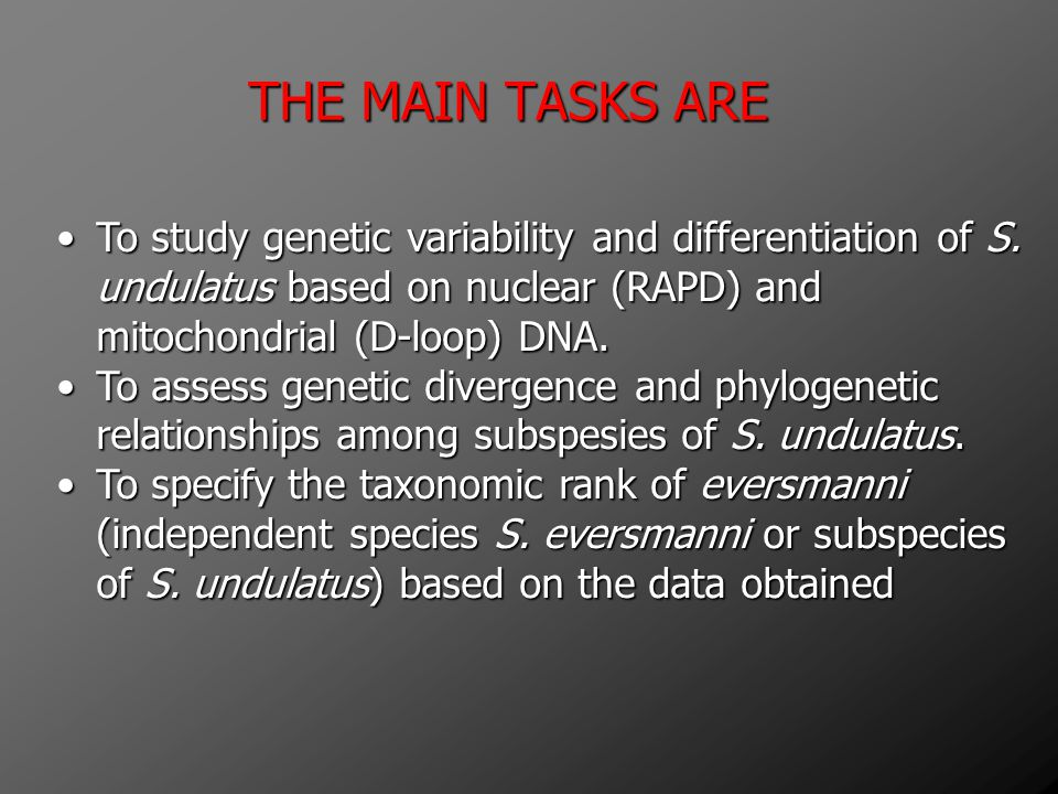 THE MAIN TASKS ARE To study genetic variability and differentiation of S. undulatus based on nuclear (RAPD) and mitochondrial (D-loop) DNA.