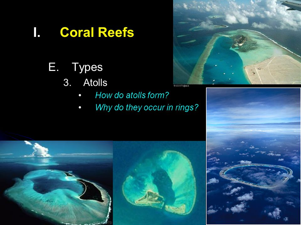 Coral Reefs Components & Dynamics Corals important components of ...