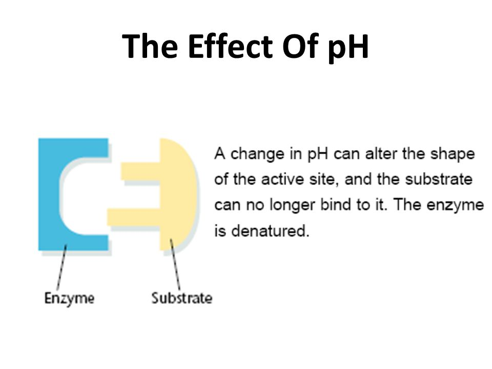 The Effect Of pH
