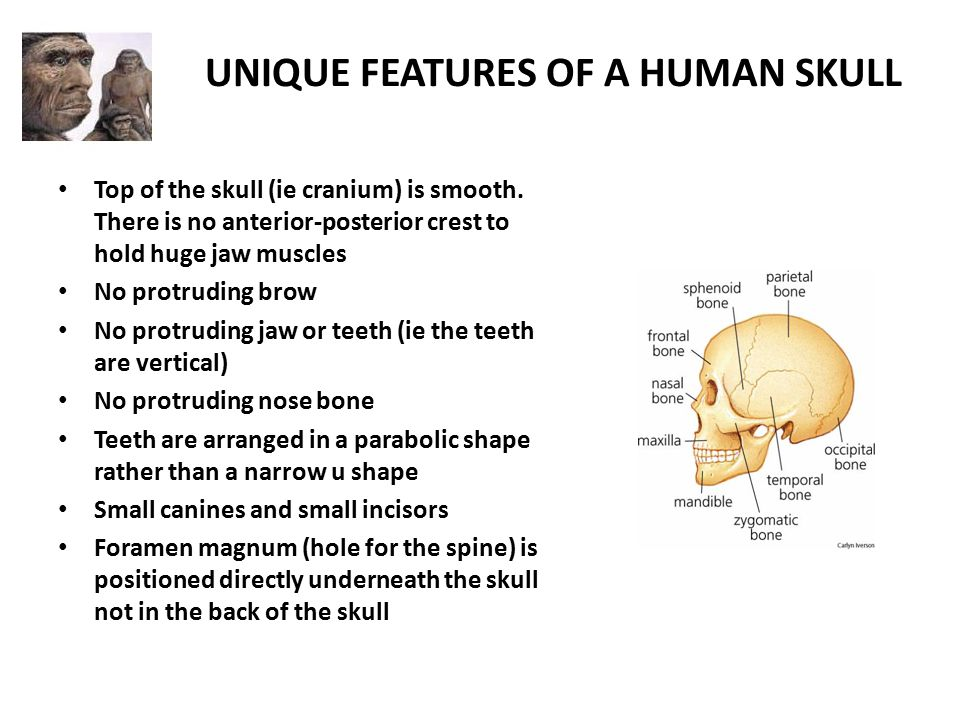 human evolution. - ppt download, Human Body