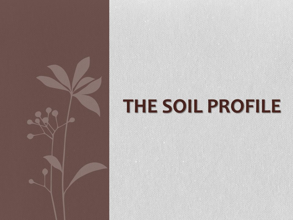 The soil profile ppt video online download for Soil profile video