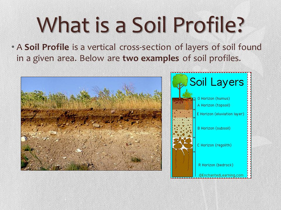 The soil profile ppt video online download for What are the different layers of soil