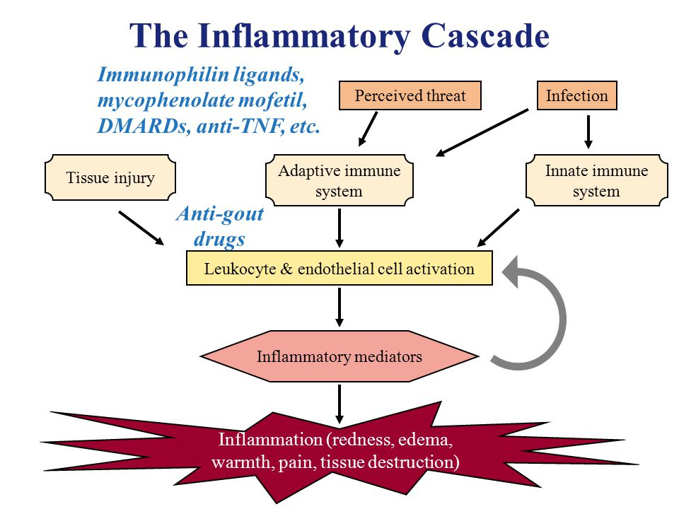 an analysis of inflammatory cascade on tissue that are injured Synovial fluid (joint fluid) is a liquid that acts as a lubricant for the major joints, such as the knees, shoulders, hips, hands, and feet laboratory tests on synovial fluid help diagnose the cause of joint inflammation, pain, swelling, and fluid build-up.