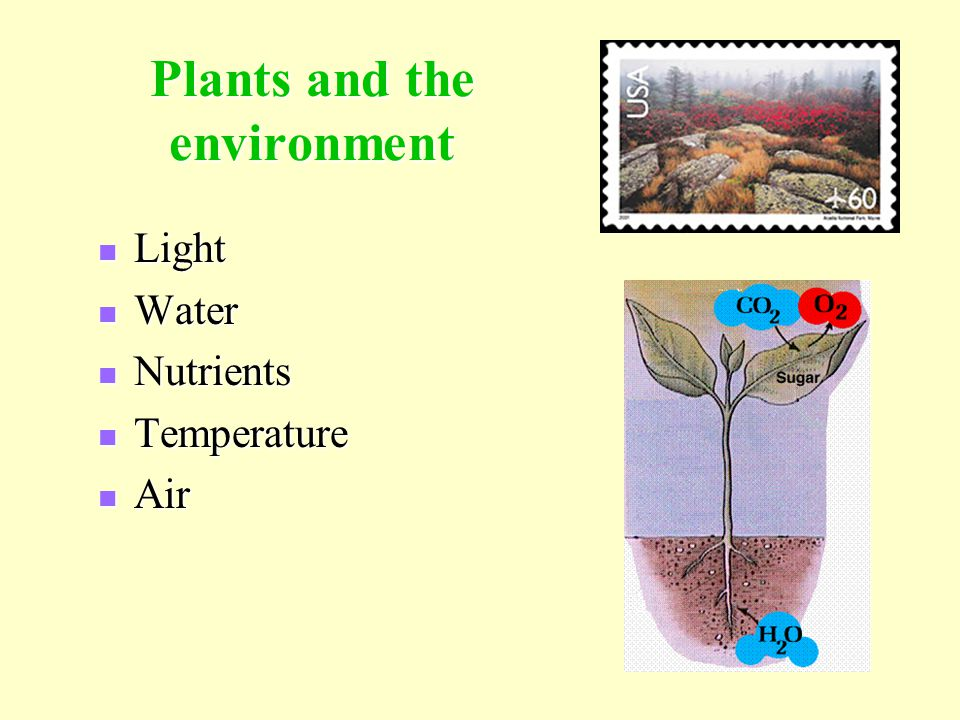 effect of temperatures on plant growth Any adverse effect of temperature stress on the membranes leads to disruption of cellular activity or death  plant growth regulation 10: 215-222.