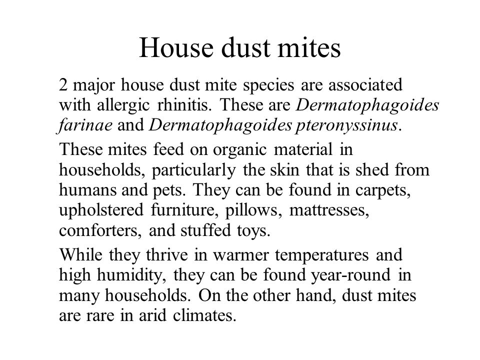 how to kill dust mites in stuffed animals