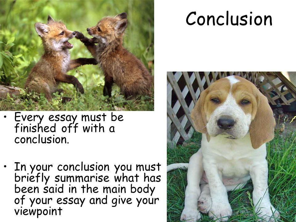 Against fox hunting essay