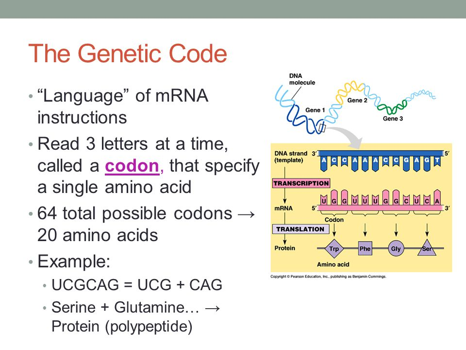 The Genetic Code Language of mRNA instructions