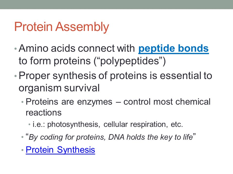 Protein Assembly Amino acids connect with peptide bonds to form proteins ( polypeptides )