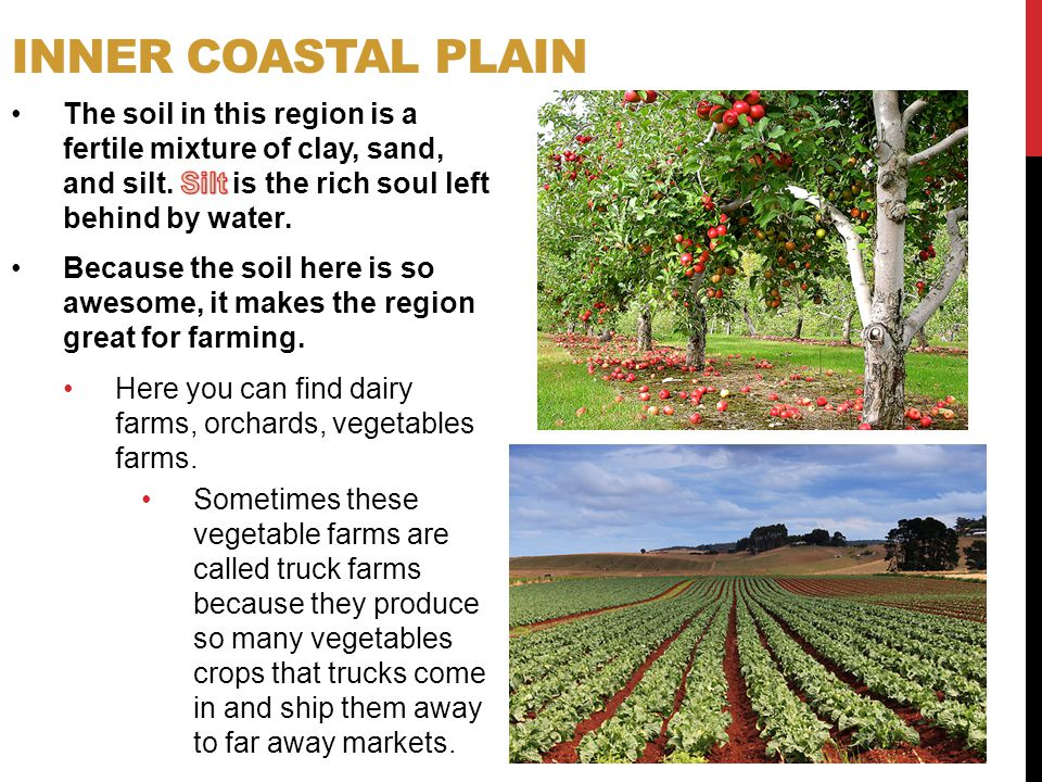 Inner Coastal Plain The soil in this region is a fertile mixture of clay, sand, and silt. Silt is the rich soul left behind by water.
