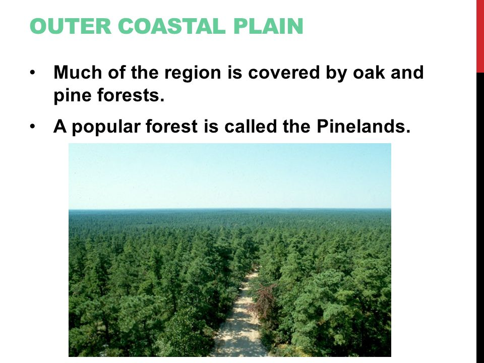 Outer Coastal Plain Much of the region is covered by oak and pine forests.