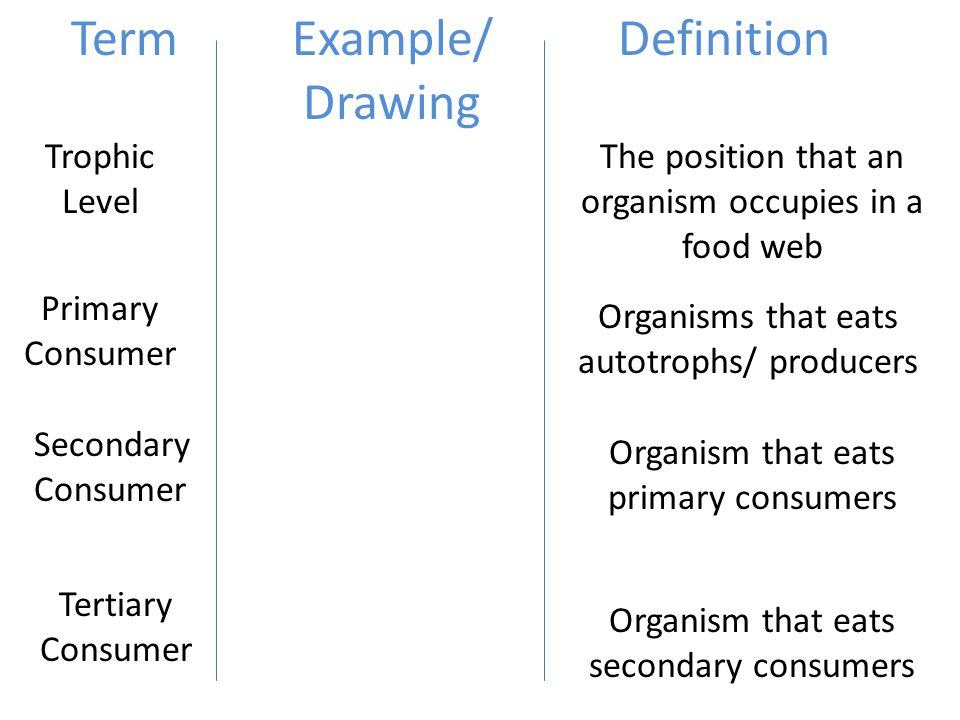 Primary Consumers Examples Food Webs and Biogeoch...