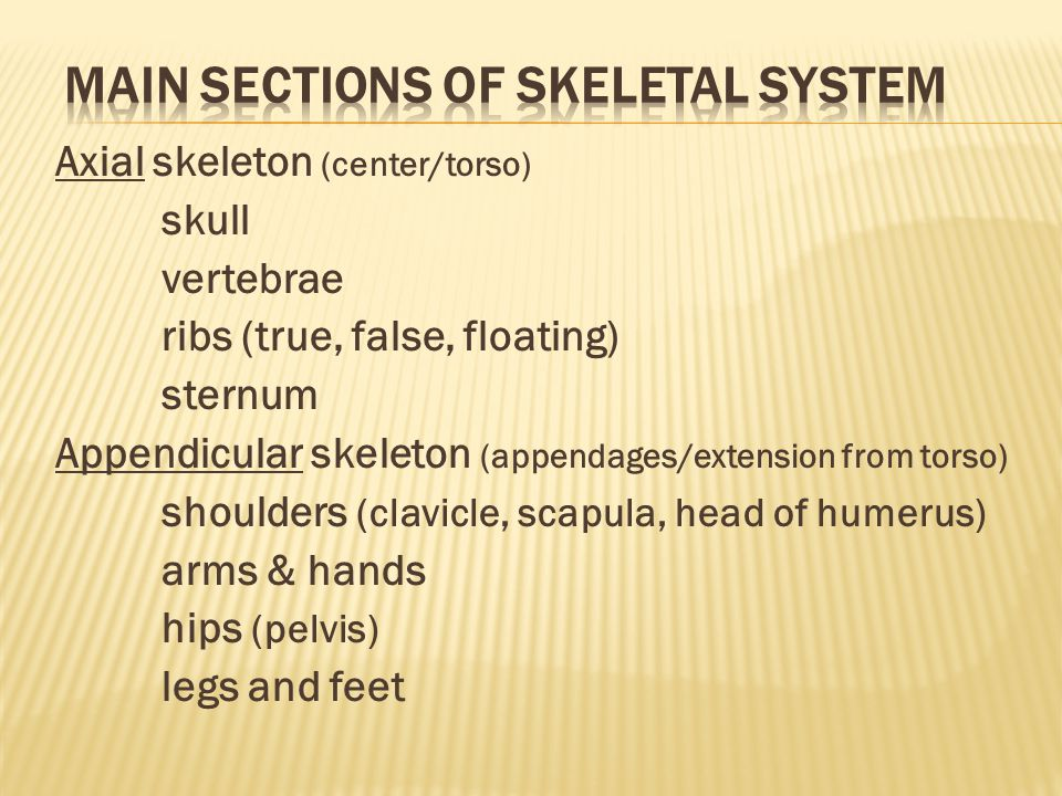 Main sections of skeletal system