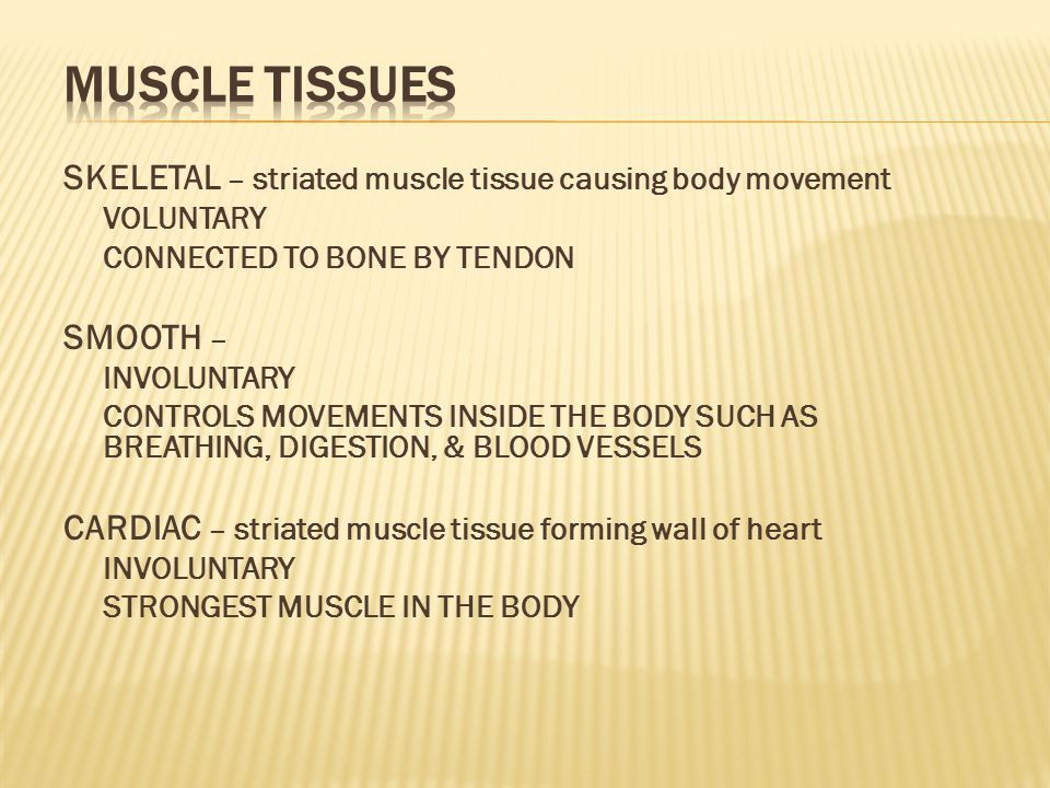 MUSCLE TISSUES SKELETAL – striated muscle tissue causing body movement