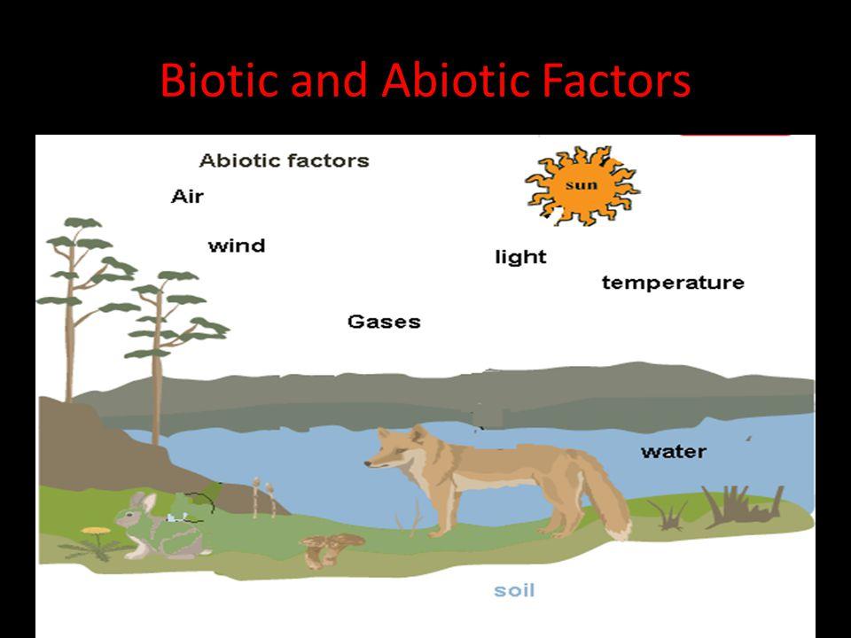 biotic and abiotic environment