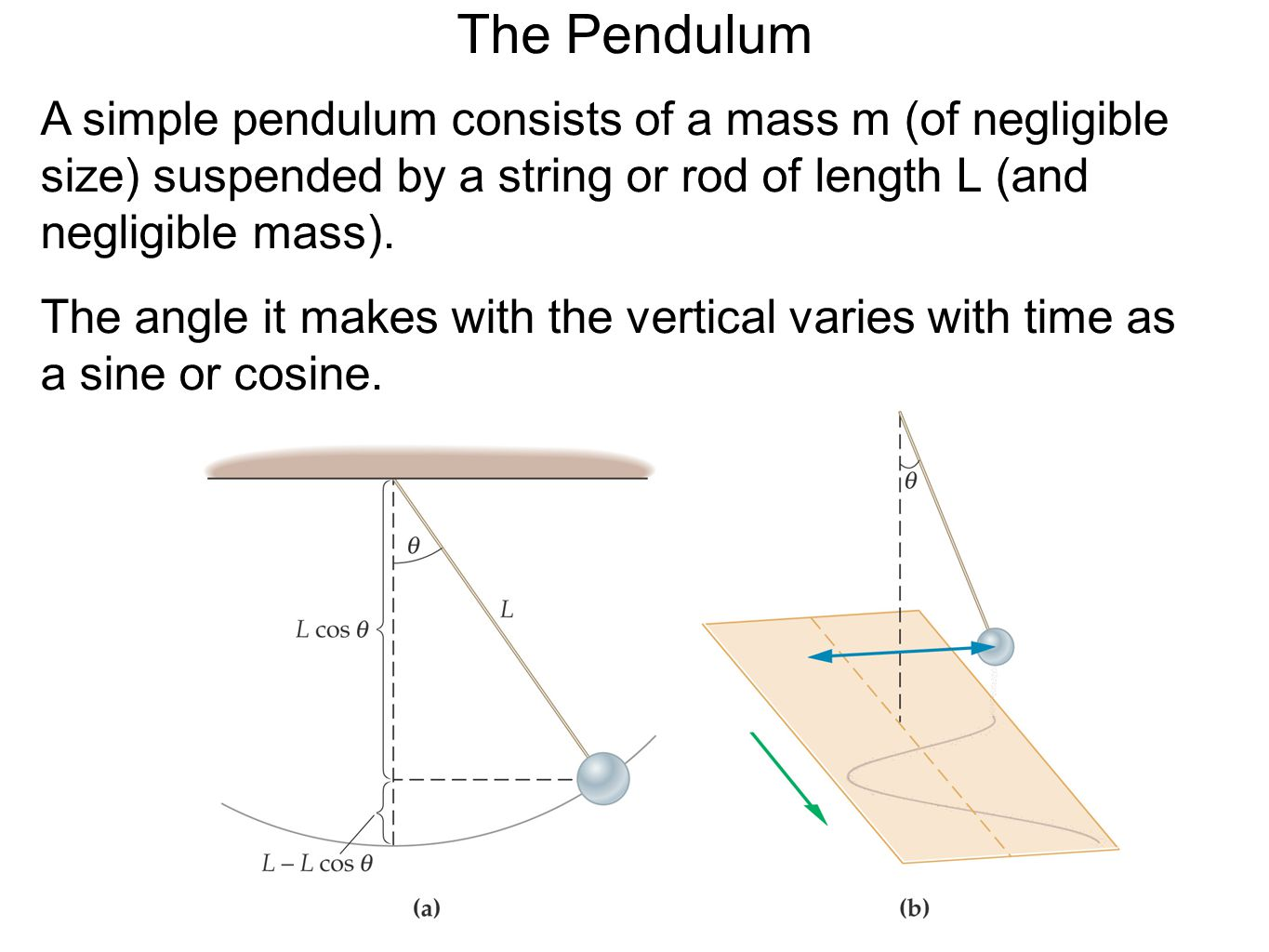 The Pendulum A simple pendulum consists of a mass m (of negligible size) suspended by a string or rod of length L (and negligible mass).