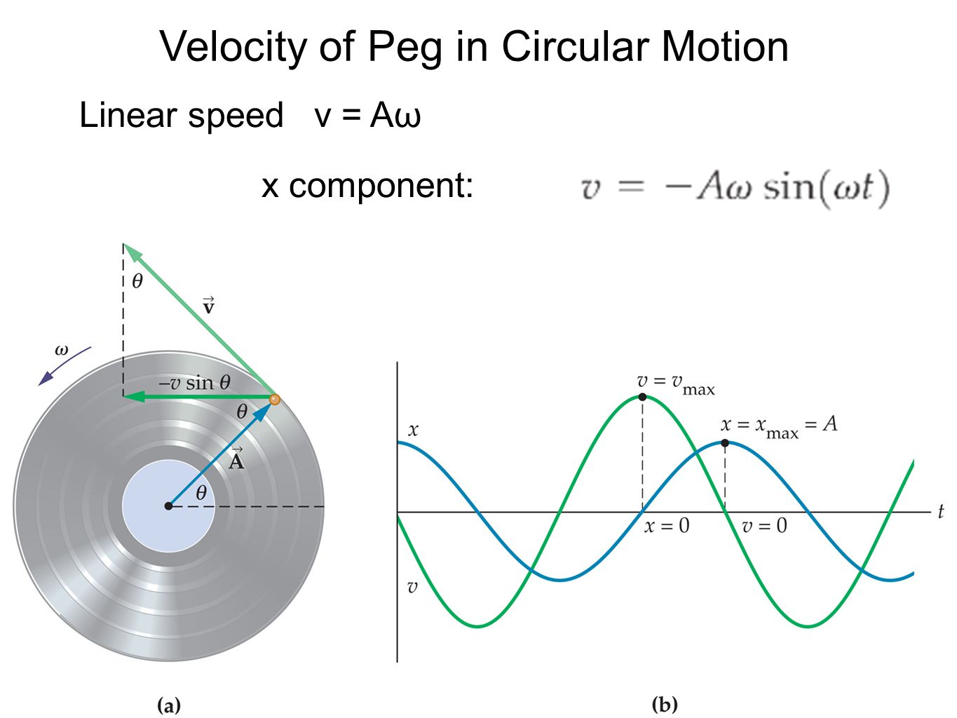 Velocity of Peg in Circular Motion