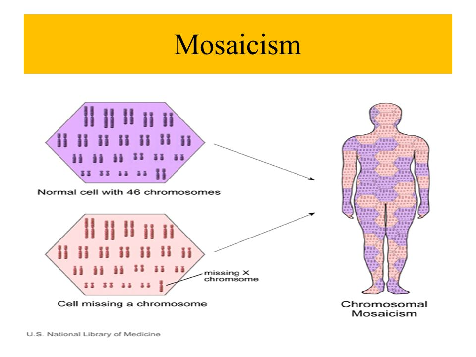 genetic mosaicism - photo #22