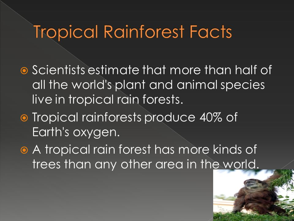 a description of tropical rainforests which cover 5 to 6 percent of the earth surface What percentage of the earth's surface does the rainforest cover on earth and now cover only about 6 percent earth's surface does tropical rainforest.