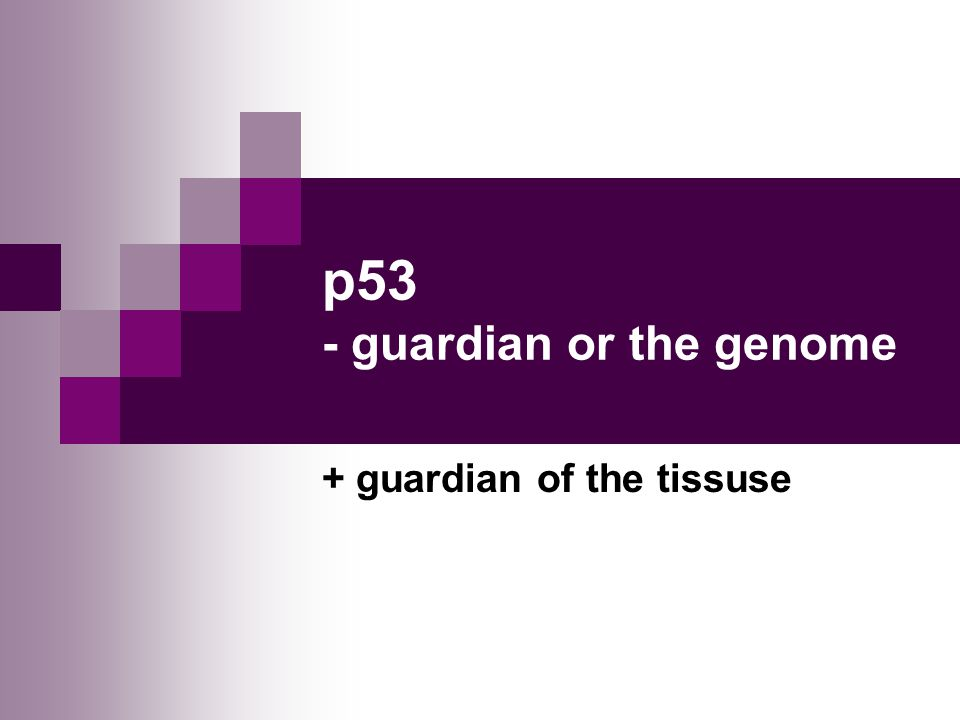 p53 guardian of genome The discovery of the tumor suppressor protein known as p53, and the process of unearthing its functions came about as a result the efforts of thousands of scientists around the globe in p53: the gene that cracked the cancer code , science writer sue armstrong takes a fresh look at the exciting breakthroughs and disappointing setbacks that characterized this endeavor.