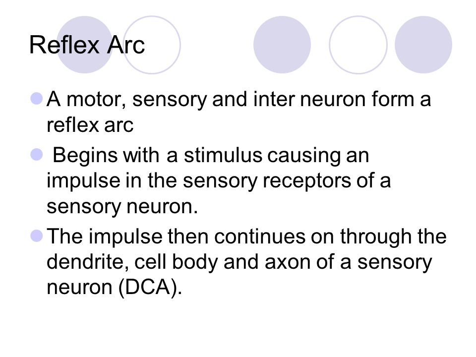 Reflex Arc A motor, sensory and inter neuron form a reflex arc