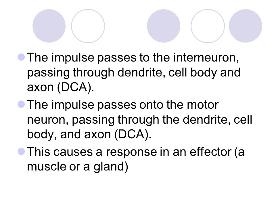 The impulse passes to the interneuron, passing through dendrite, cell body and axon (DCA).