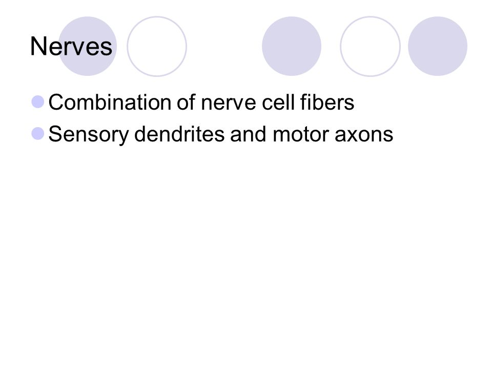 Nerves Combination of nerve cell fibers
