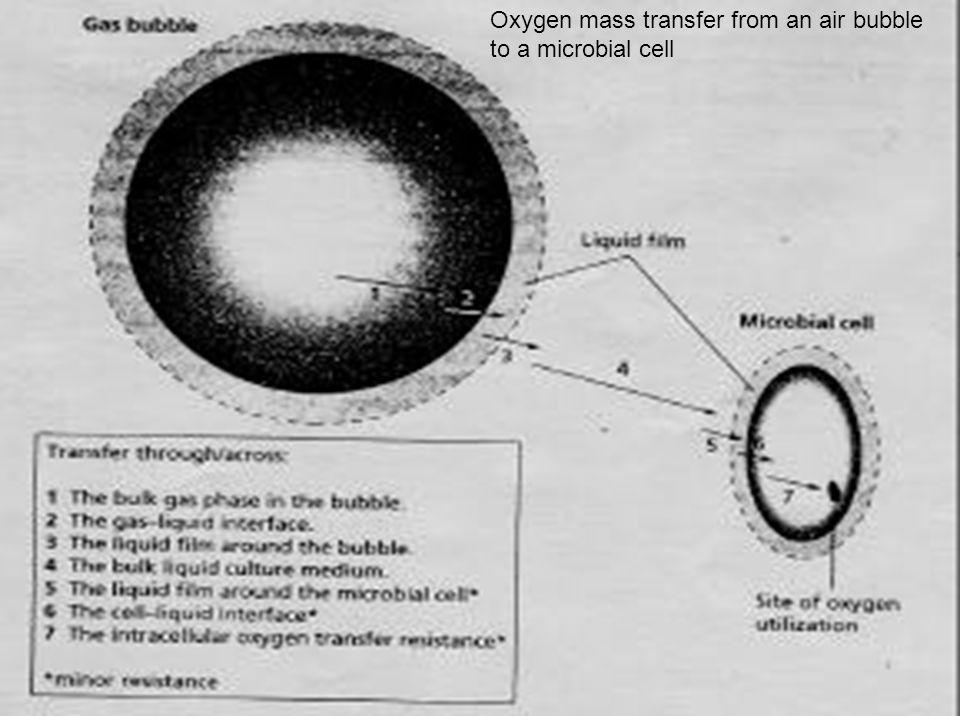 Oxygen mass transfer from an air bubble to a microbial cell