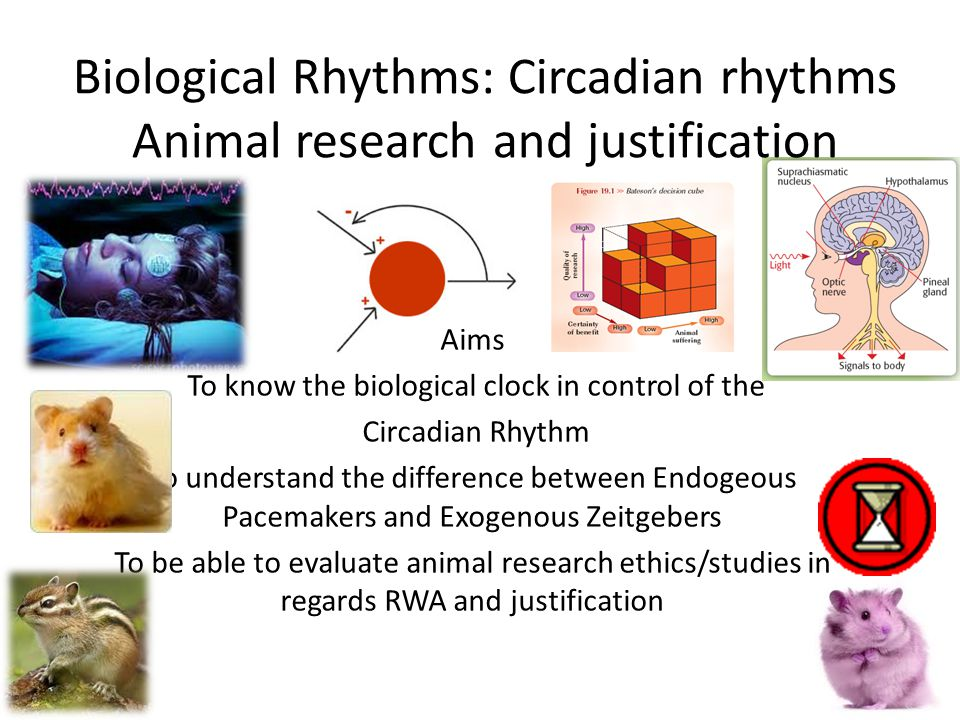 biological rhythms