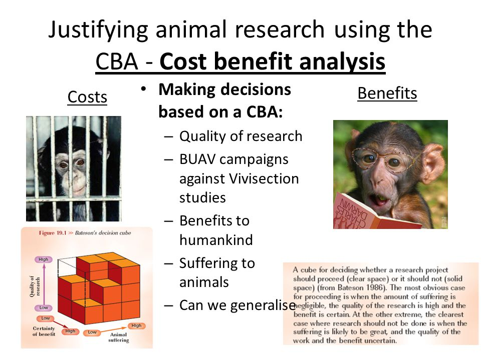 Animal Testing and Research
