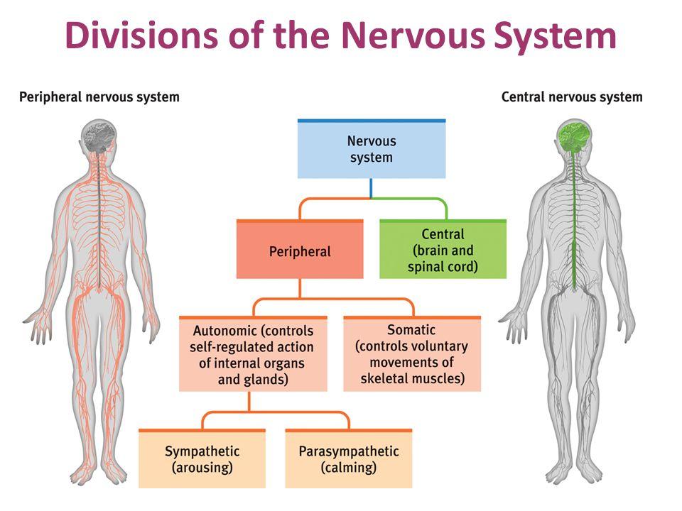 The Biology of Behavior - ppt download