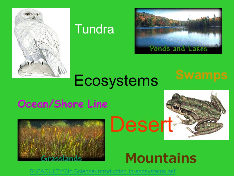 Desert Ecosystems Tundra Swamps Mountains Ocean/Shore Line