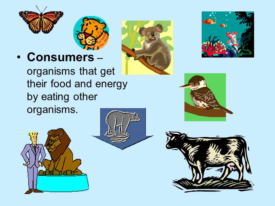 Consumers – organisms that get their food and energy by eating other organisms.