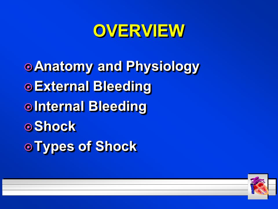 OVERVIEW Anatomy and Physiology External Bleeding Internal Bleeding